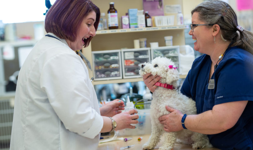 a veterinarian and a vet tech caring for a small white dog