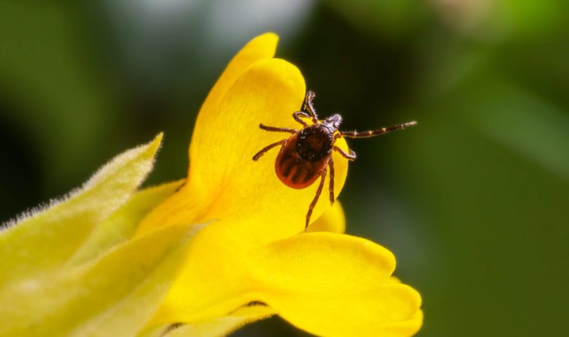 a bug on a yellow flower