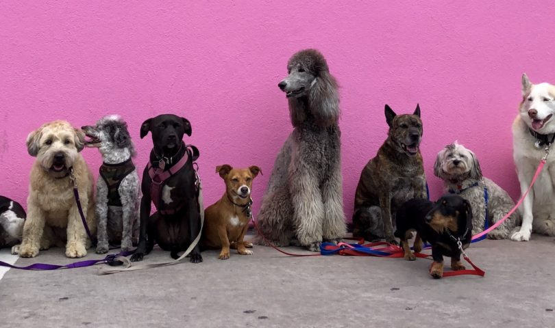 several dogs in front of a pink wall