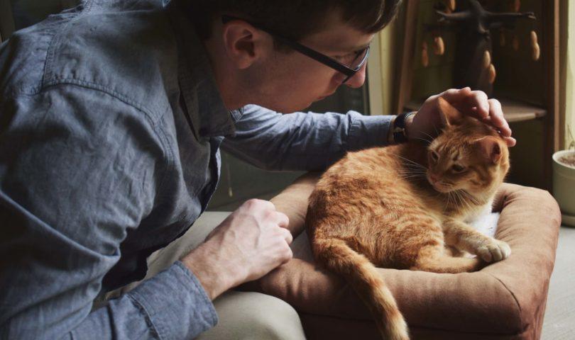 a man petting an orange cat