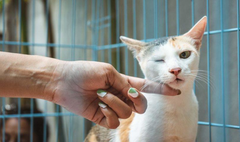a person rubbing the chin of a calico cat