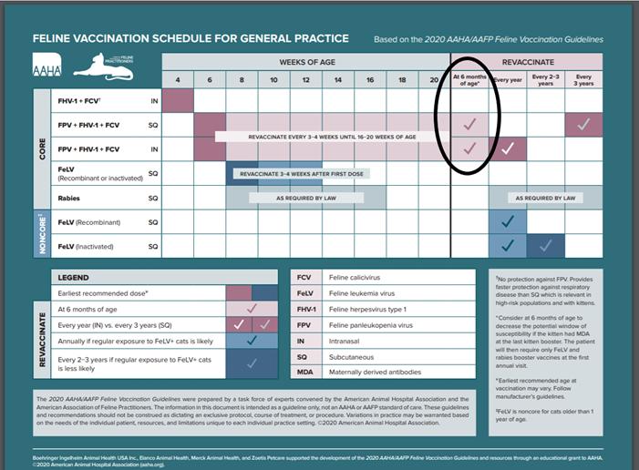 Feline vaccination schedule for general practice