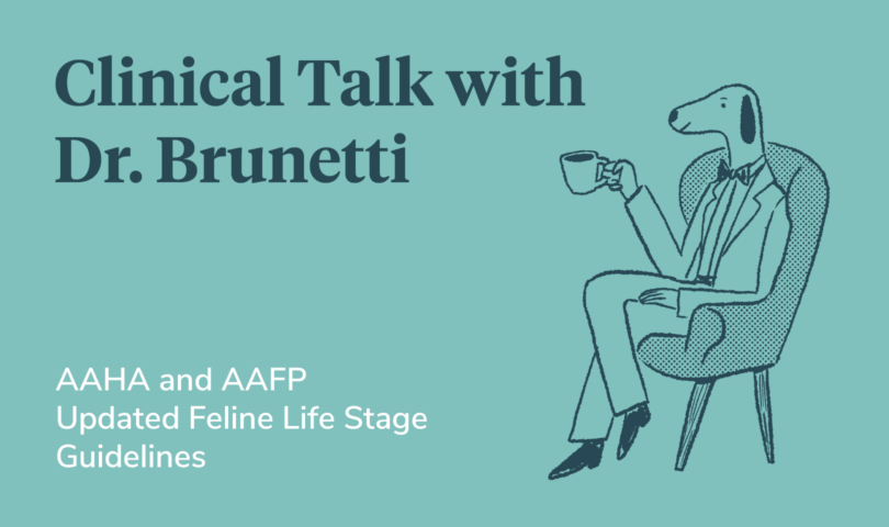 Clinical Talk: Feline life stage guidelines