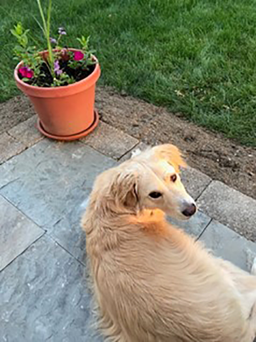 Meira: A mixed-race dog with exocrine pancreatic insufficiency
