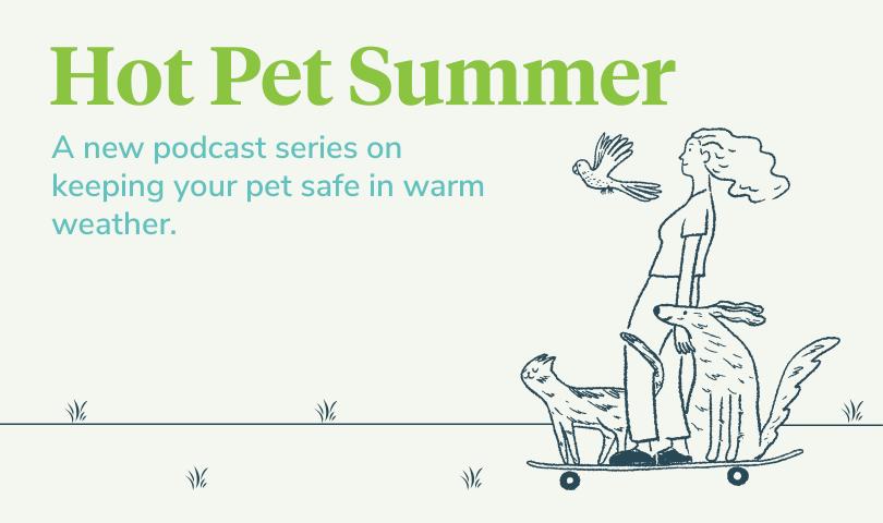 hot pet summer veterinarian
