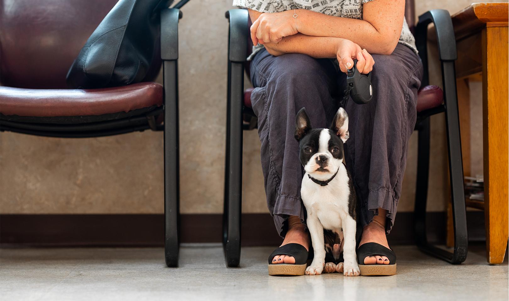 a veterinarian waiting room